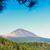 vulcânico · ilha · tenerife · pinho · floresta - foto stock © neirfy