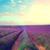 paars · lavendel · zonsondergang · Frankrijk · hemel · achtergrond - stockfoto © neirfy