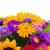 красивой · Полевые · цветы · садоводства · ботаника · лет - Сток-фото © neirfy