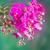 mor · orkide · şube · mavi · yalıtılmış · beyaz - stok fotoğraf © neirfy