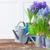 jardin · outils · pot · fleurs · d'été · herbe · travaux - photo stock © neirfy