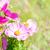 花 · 青空 · 花 · 太陽 · 自然 · デザイン - ストックフォト © neirfy