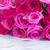 frescos · rosas · frontera · rosa · aislado · blanco - foto stock © neirfy
