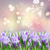 flores · da · primavera · isolado · branco · páscoa · flores - foto stock © neirfy