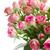 çerçeve · pembe · güller · yalıtılmış · beyaz - stok fotoğraf © neirfy