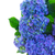 flores · vida · enferrujado · cadeira - foto stock © neirfy