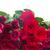 granicy · red · roses · czerwony · różowy · róż - zdjęcia stock © neirfy