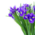 синий · цветы · кадр · серый · bokeh - Сток-фото © neirfy
