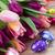 húsvéti · tojások · lila · tulipán · virágok · izolált · fehér - stock fotó © neirfy