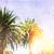 Kaliforniya · palmiye · ağaçları · mavi · gökyüzü · yüksek · grup · gökyüzü - stok fotoğraf © neirfy