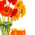 gerbera flowers in vase with gift box stock photo © neirfy