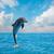 uno · jumping · delfini · paesaggio · marino · profondità · Ocean - foto d'archivio © neirfy
