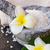 crisantemo · fiore · ciotola · acqua - foto d'archivio © neirfy