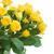 bouquet · fresche · rose · giallo - foto d'archivio © neirfy