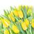 friss · tulipánok · nyár · nap · virágok · boldog - stock fotó © neirfy