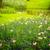 kert · virágok · virág · tavasz · idő - stock fotó © neirfy