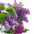 jacinto · rosa · violeta · flores - foto stock © neirfy