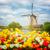 moulin · à · vent · tulipes · domaine · coloré · jaune - photo stock © neirfy