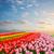 mooie · roze · tulp · bloemen · gras · blauwe · hemel - stockfoto © neirfy