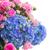 банка · розовый · роз · свежие · карт · красивой - Сток-фото © neirfy
