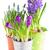 roxo · flores · pote · isolado · branco - foto stock © neirfy