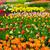 春の花 · オランダ · 庭園 · カラフル · オランダ · レトロな - ストックフォト © neirfy