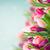 rosa · tulipanes · campo · cielo · azul · flores - foto stock © neirfy