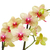 yellow and red orchid branch stock photo © neirfy
