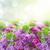 brunch · mavi · gökyüzü · mor · çiçekler · güzel - stok fotoğraf © neirfy