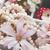 magnolia · alma · virágok · absztrakt · háttér · légy - stock fotó © neirfy