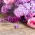 fresh lilac flowers stock photo © neirfy