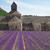 abdij · lavendel · veld · Frankrijk · gebouw - stockfoto © neirfy