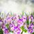 primavera · flores · creciente · blanco · Pascua · hierba - foto stock © neirfy