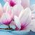 magnolia pink flowers stock photo © neirfy