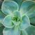 サボテン · 花 · 自然 · 庭園 · 葉 - ストックフォト © neirfy