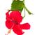 ebegümeci · pembe · büyüyen · tropikal · bahçe · doğa - stok fotoğraf © neirfy