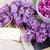 bokor · orgona · virágok · keret · kék · ég · bokeh - stock fotó © neirfy