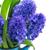 mavi · sümbül · lale · taze · Paskalya - stok fotoğraf © neirfy