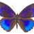morpho adonis blue butterfly stock photo © neirfy