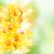 jaune · orchidée · fleurs · feuilles · vertes · isolé - photo stock © neirfy