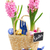 hyacinth flowers with eggs stock photo © neirfy