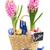 jacinto · flores · jardim · ferramentas · ovos · de · páscoa · rústico - foto stock © neirfy