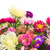 macro · roze · bloem · najaar · kleur · paars - stockfoto © neirfy