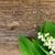 lelie · vallei · bloemen · geïsoleerd · witte · voorjaar - stockfoto © neirfy