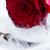 güller · pembe - stok fotoğraf © neirfy
