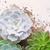 succulente · crescita · impianti · verde · bianco · legno - foto d'archivio © neirfy
