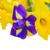 Geel · narcis · Blauw · iris · bloemen · grens - stockfoto © neirfy