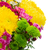 hermosa · flores · rojas · crisantemo · verde · primavera · belleza - foto stock © neirfy