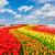 新鮮な · 黄色 · 春 · チューリップ · 花 · 自然 - ストックフォト © neirfy