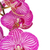 orchid flowers branch closr up stock photo © neirfy
